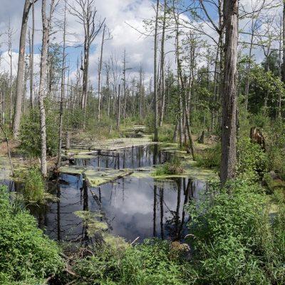 Bagna Parku Narodowy Pripiatskij Białoruś