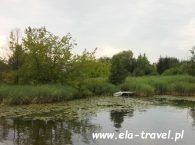 dziki brzeg rzeka Netta Augustów